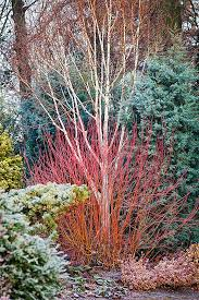 Small Picture The 25 best Winter garden ideas on Pinterest Fall planting