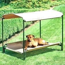 outdoor raised dog bed – lostcosmonauts.info