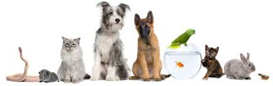 Most Popular Pets Top 10 Most Popular Pet Names Of 2012 Dogtime
