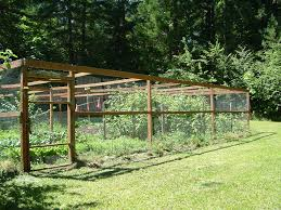 Kitchen Garden Fence This Vegetable Garden Is Entirely Enclosed By A Fence Of Cedar