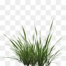 grass png. Contemporary Grass PNG Throughout Grass Png
