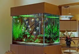 Cool Aquariums Custom Fish Tank Designs For Freshwater Aquariums Modern