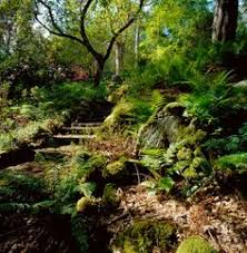 Small Picture lovely woodland garden with hostas Backyard Pinterest