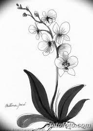 черно белый эскиз тату рисункок орхидея 11032019 006 Tattoo