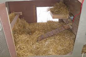 Image result for winterizing your chicken coops