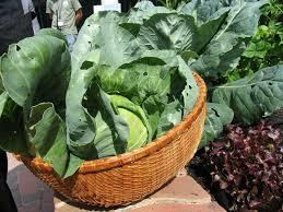 Organic Kitchen Gardening General Vegetable Garden Care Articles Gardening Know How