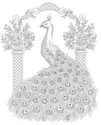 Peacock Coloring Pages For Adults Coloringstar
