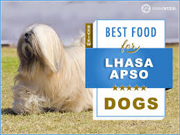 Lhasa Apso Diet Chart 7 Best Foods To Feed An Adult And Puppy Lhasa Apso In 2019