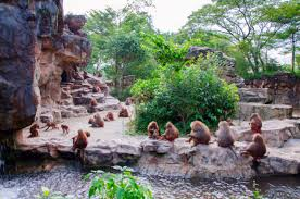 guide to singapore zoo leisure p group