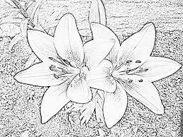 Coloriage A Imprimer Fleur De Lys L L L L