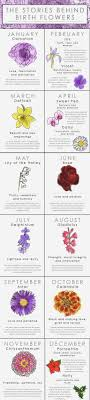 Month Flowers Chart Birth Month Flowers Chart Hd Image Flower And Rose Xmjunci Com