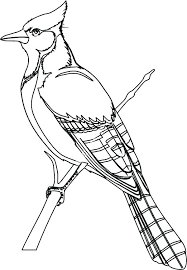 New Eastern Bluebird Coloring Page Or Eastern Bluebird Coloring Page
