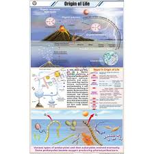 Origin Of Life Chart 58x90cm