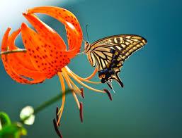 Resultado de imagen para hojas y mariposas y flor