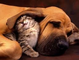 kittens and puppies hugging. Delighful And Kitten And Puppy Hug To Kittens And Puppies Hugging