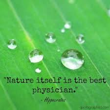 Nature Itself Is The Best Physician Quotographed Simple Best Nature Quotes