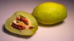 Плоды и семена Плод Это один из самых характерных органов покрытосеменных растений Он состоит из околоплодника и семян Околоплодник представляющий собой разросшуюся и