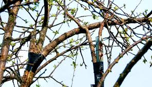 tree bark repair methods. Fine Bark A Cracked Fruit Tree Branch Might Not Mean The End Of Branch Hereu0027s  How To Repair It With Some Effort And A Few Tools Intended Tree Bark Repair Methods