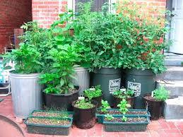 container vegetable gardening beginners. vegetable garden beginner gardening container beginners g