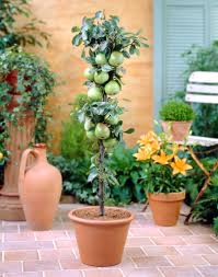 Growing Pear Trees Tips For The Care Of Pear TreesFull Size Fruit Trees For Sale