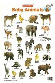 Buy Educational Charts Baby Animals Book Online At Low