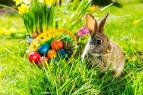 Пасхальные кролик