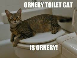 Ornery Toilet Cat Meme by SecretFinalBoss on DeviantArt via Relatably.com
