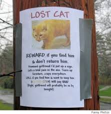 Lost Cat Flyer Legs Funny Lost Cat Flyers