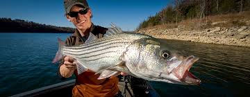 Lake Pleasant Az Depth Chart Striped Bass Br Hottest Spots In The West