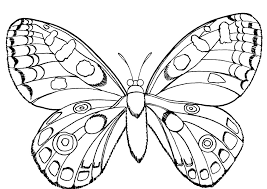 Small Picture Butterfly And Insect Coloring Pages httpwwwkidscpcom