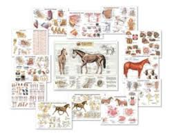 Equine Anatomy Charts Complete Set Of 13 Laminated Charts Special Offer