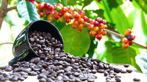 There, legend says the goat herder kaldi first discovered the potential of these Arabica Coffee History And Facts