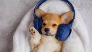 Melhores Músicas para Cachorro - Como encontrar a MELHOR? Veja!