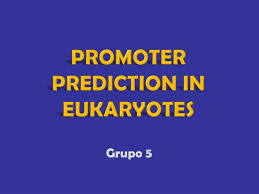 ppt promoter prediction in eukaryotes