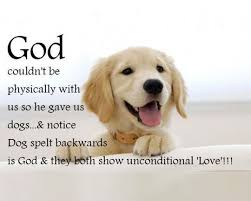 Dog Quotes Love Fascinating 48 Dog Quotes About Love And Compassion Luke Pinterest Dog