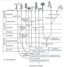 evolution of plants essay on the evolution of plants image