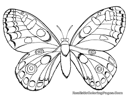 Small Picture Bug Coloring Pages 3652 Realistic Insect For Free Printable