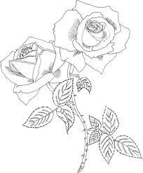 Disegno Di Rosa Tropicana Da Colorare Disegni Da Colorare E