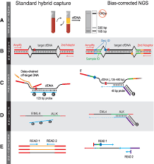 Bias Corrected Targeted Next Generation Sequencing For Rapid