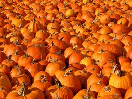Image result for HALLOWEEN ON THE FARM