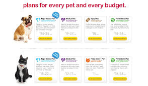 quote pet insurance australia 44billionlater