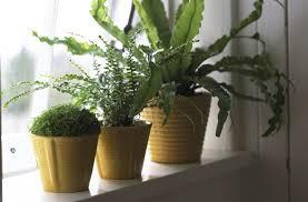 Not Enough Light For Plants Understanding Natural Light For Houseplants