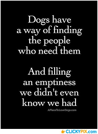 Rescue Dog Quotes Classy I Will Always Be A Cat Person But My Geno Showed Me What I Didn't