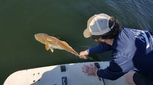Near Shore Reef Fishing Review Of Atlantic Breeze Charters