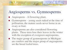 Angiosperm Vs Gymnosperm Venn Diagram Angiosperm Vs Gymnosperm Images