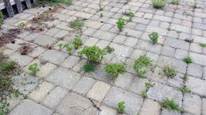 how to remove weeds in between pavers