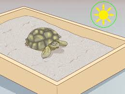 Russian Tortoise Age Size Chart How To Take Care Of A Russian Tortoise 10 Steps With Pictures