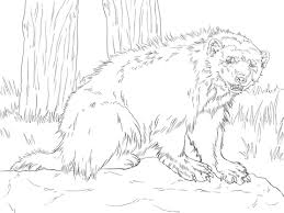 Small Picture Growling Wolverine coloring page Free Printable Coloring Pages