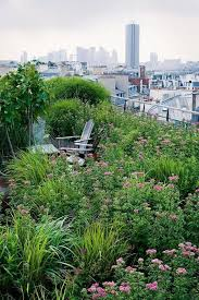 green roofs and great savings rooftop