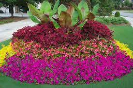 flower gardens pictures. Flower Gardens In The South Garden Pictures N